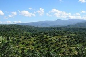 La campagne œcuménique dénonce les ravages de l'accaparement des terres