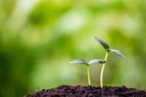 Agriculture biologique : des monastères se convertissent