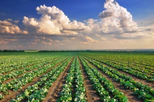 Qui doit éradiquer la faim?