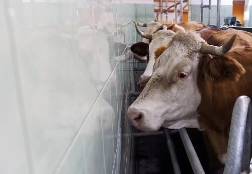 Crise de l'élevage, à qui la faute ?