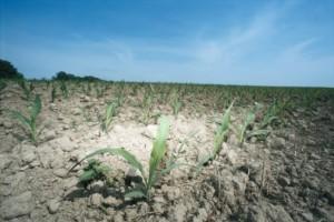 Climat : combattre le sentiment d'impuissance