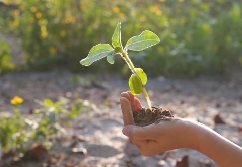 Une pétition incite l'Eglise réformée vaudoise à privilégier les questions écologiques