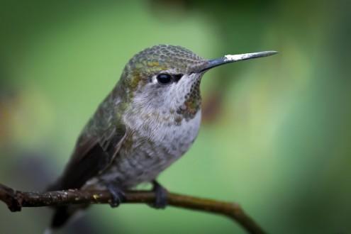 L'espérance du colibri