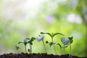 Quelles petites graines allez-vous semer ?