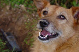 Pleurer la perte de son animal domestique n'est plus un tabou