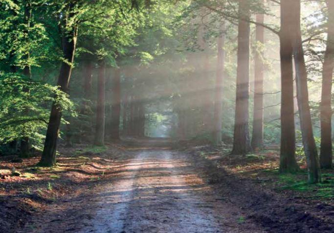 Accompagner l'expression de la spiritualité