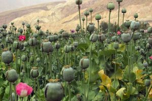 De par le monde : l'héroïne d'Afghanistan