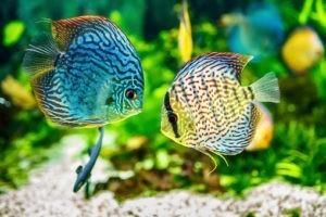 Le monde est un aquarium !