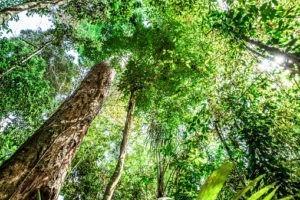 Voyage aux sources mystiques de l'Amazonie