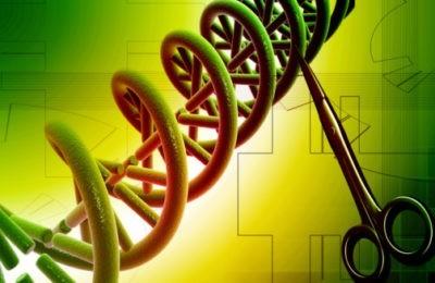 Ciseaux à ADN : entre folles espérances et craintes raisonnables…