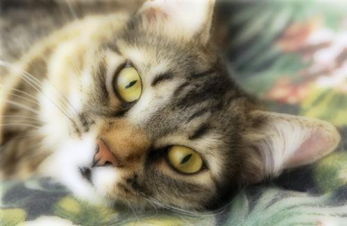 « Ma chatte Rosalie est comme mon bébé »