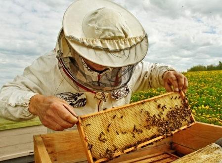 Un modèle plus sage d'apiculture