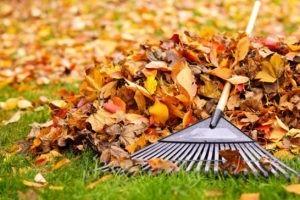 Que faire dans son jardin en automne ?