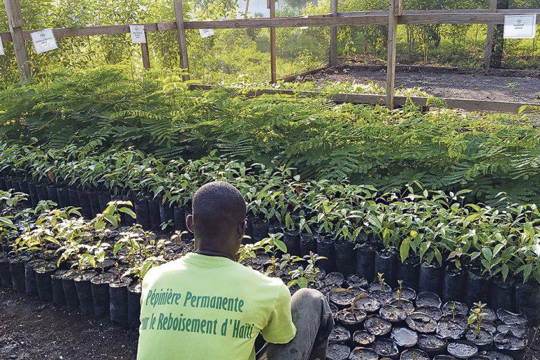 Un livre sur les arbres et un kit pour reboiser Haïti