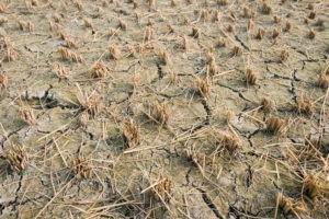Que dit la Bible de la famine ?