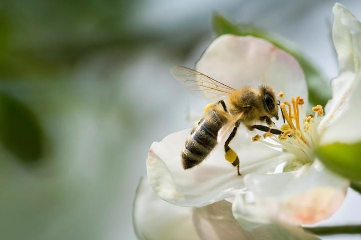 Des députés européens au secours des abeilles