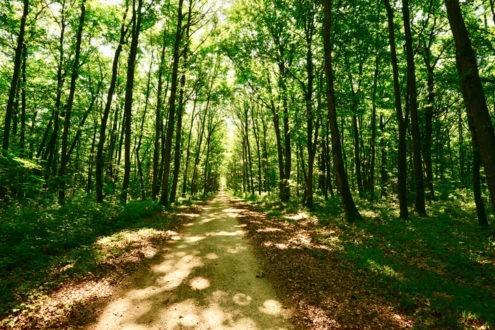 Préparez une journée Eglise verte pour la Création