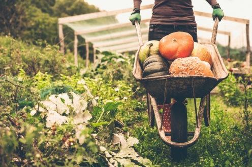 Que faire au jardin en cette fin d'été ?