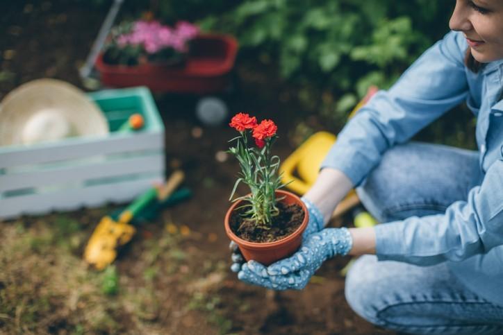 Le jardin, un écosystème