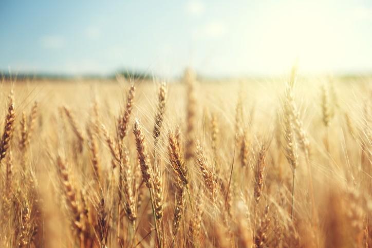 De la fête des récoltes... au Temps pour la Création