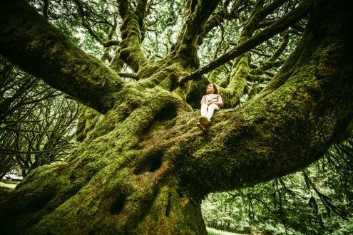 Même âgé, l'arbre fructifie encore