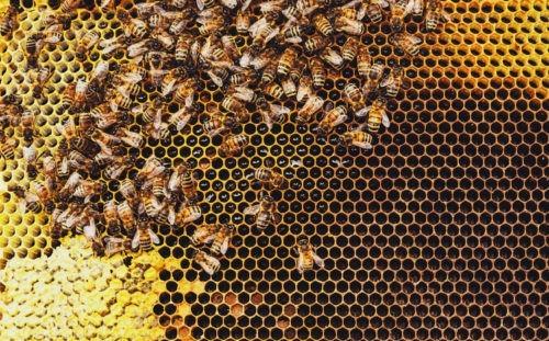 Le miel des diaconesses de Reuilly