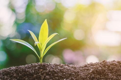 Premier pas dans une démarche d'Eglise verte