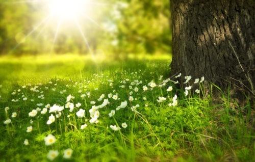 12 idées légères pour le printemps