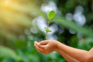 Quelle est la responsabilité du chrétien par rapport à la création ?