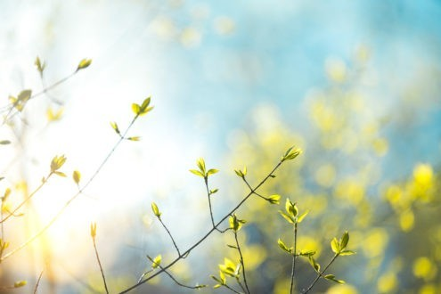 A Rocha, des chrétiens pour la nature