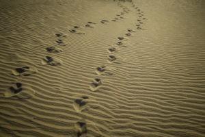 Déserts pastoraux : quelles solutions ?
