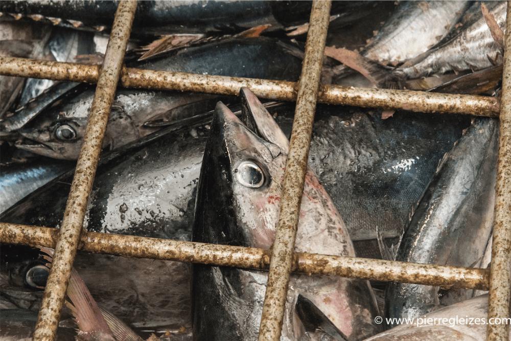 Des photos pour dénoncer la surpêche
