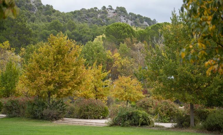 Novembre vert