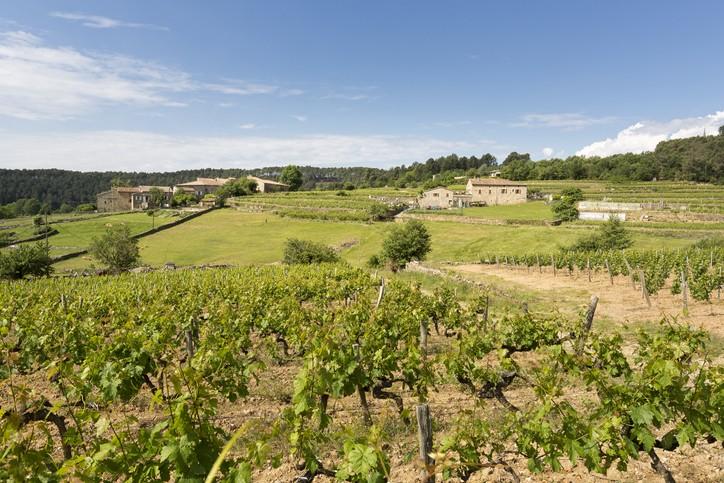 Vignes en pleine campagne avec des champs verts en arrière plan et une maison ardéchoise