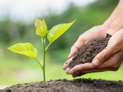 5 juin : Journée mondiale de l'environnement