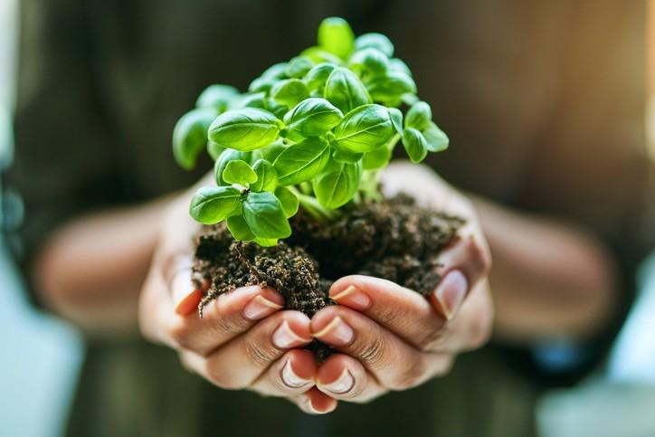 L'écologie comme mode de vie