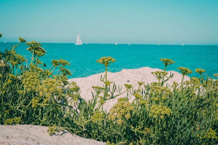 Vacances d'été 2020 : les Français encore un peu incertains