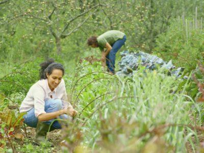 Pour une permaculture évangélique