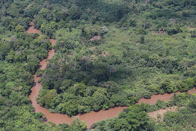forêt Congo